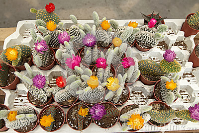 Assortment of Cactus 2
