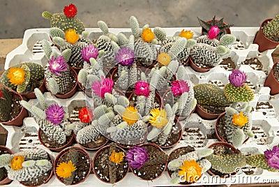 Assortment of Cactus 2