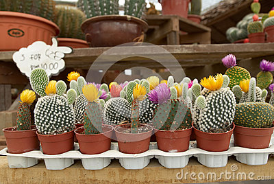 Assortment of Cactus