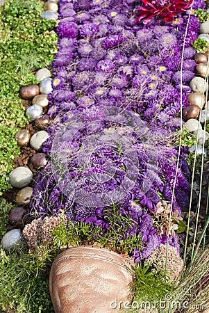 Aster Violet Flowerbed