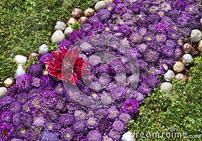 Aster Violet Green Flowerbed