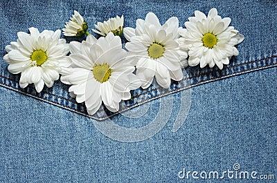 Asters on denim fabric
