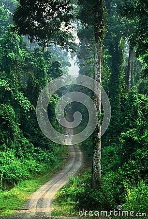 Free Astonishing Rainforest Of Borneo Royalty Free Stock Images - 50656839
