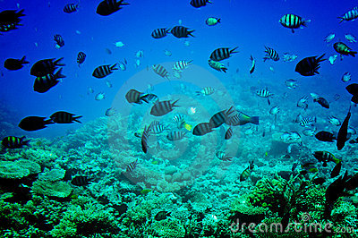 Astonishing undersea world of Red sea.