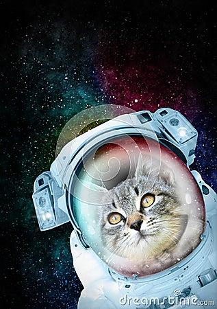 Free Astronaut Cat Exploring The Space Stock Photos - 78139833