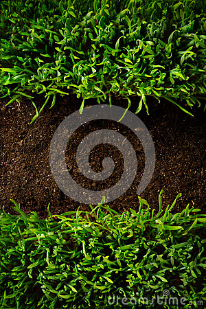 Free At Grass Frame In White Ground Background Royalty Free Stock Images - 37782079