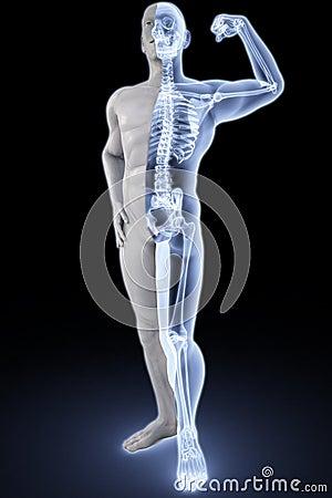 Free Athlete Under Xrays Stock Images - 13597064