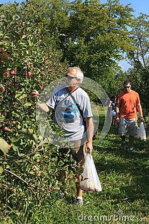 Atividade da família do pomar de Virgínia da colheita de Apple Fotografia Editorial