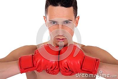Atlety boksera samiec
