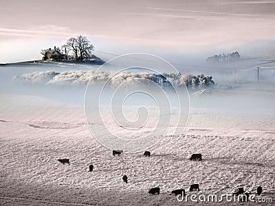 Atmospheric frozen Prairie