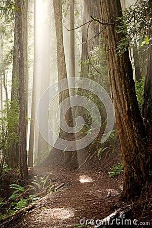 Através das árvores