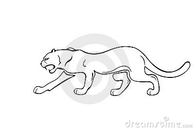 Attacking wild panther