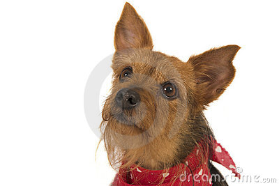Attentive dog