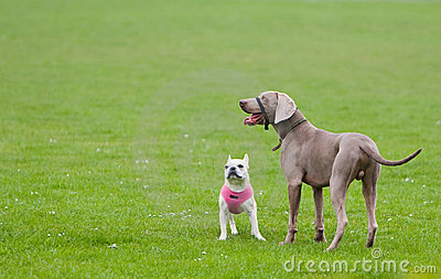 Attentive Dogs on Green Grass