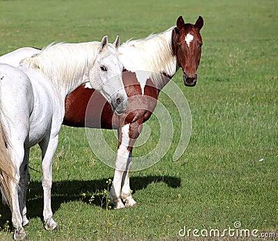 Attentive horses.