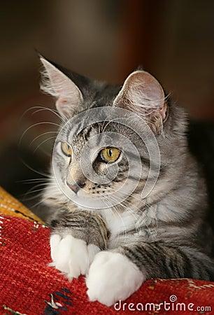Attentive look