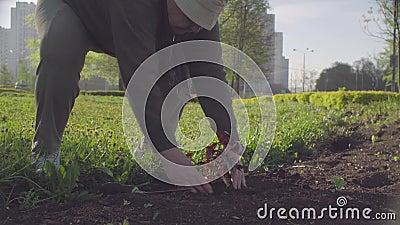 Attivista verde senior che pianta un fiore in una città stock footage