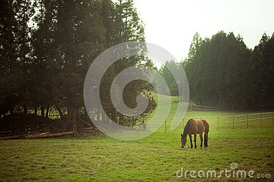 Attract landscape with horse