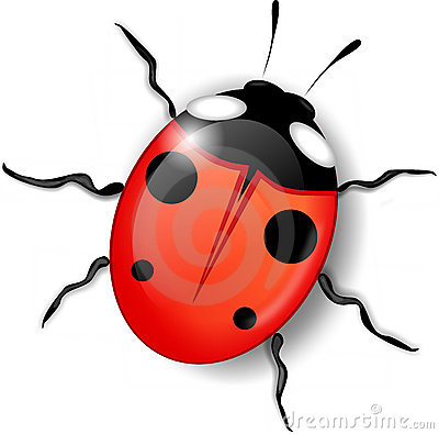 Attractive ladybird