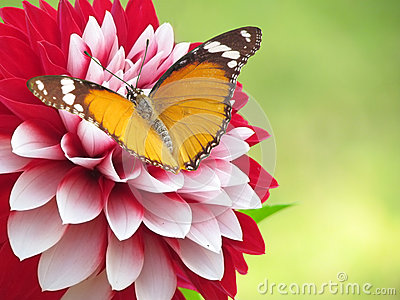 Spring flower and butterfly background