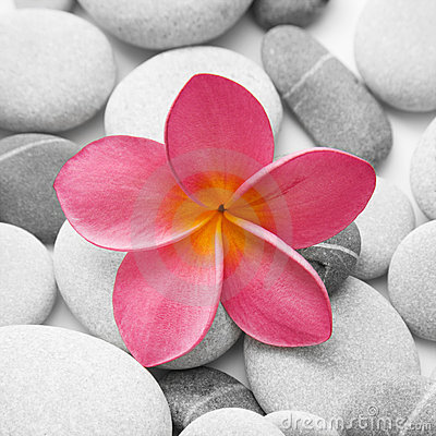 Free Attractive Pebbles And Flower Stock Photos - 10948853