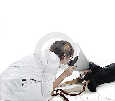 Attractive veterinarian examines dog