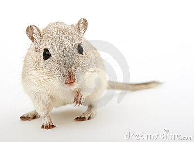 Attractive young female rodent