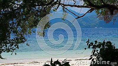 Au-dessous des arbres sur une plage tropicale banque de vidéos