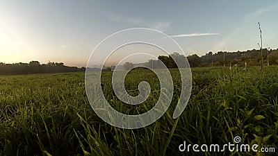 Aube visuelle de Dron sur une rivière, fumée sur l'eau banque de vidéos
