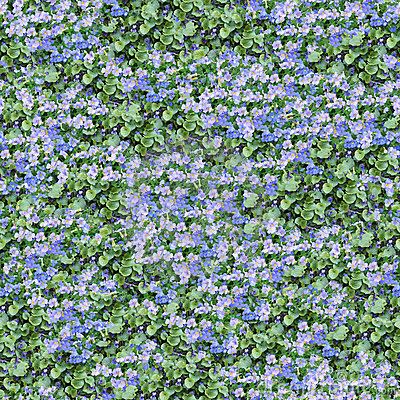 Aubrieta and violet seamless composable pattern