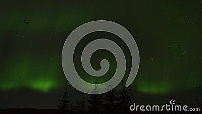 Aurora Borealis majestuosa y potente, luz septentrional, bailando sobre árbol spruce remata en el cielo nocturno llenado estrella almacen de video