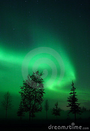 Free Aurora Swirl Over Trees Royalty Free Stock Photography - 396727