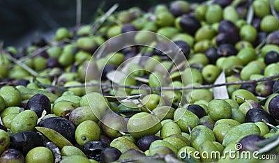 Ausgewählte Oliven und Blätter