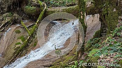 Aussicht auf den Wasserfall im ersten Fall mit Moorbäumen stock video