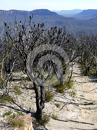 Australia: Blue Mountains after bushfire