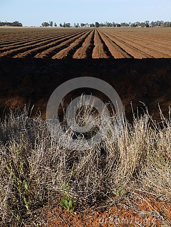 Australia: cotton field irrigation ditches