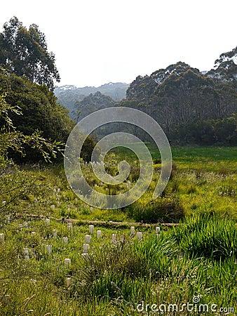 Australia: native bush regeneration new trees