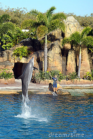 Australia Sea World Dolphin Performer Editorial Stock Image