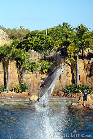 Australia Sea World Dolphin Performer Editorial Stock Photo