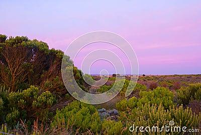 Australian bushland with purple sky