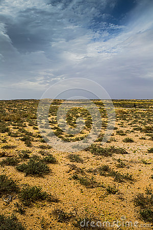 Free Australian Desert Shrubs Over A Stormy Winter Sky Stock Photos - 57306253