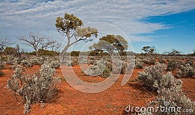 The australian landscape