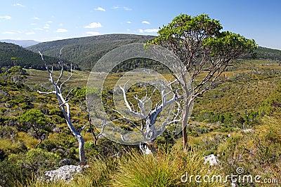 Australian landscape in Tasmania