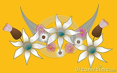 Australian Native Flowers