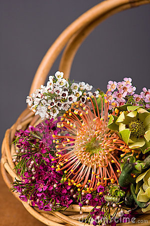 Free Australian Native Flowers Stock Image - 6691601