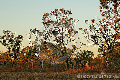 Australian Outback in the Evening