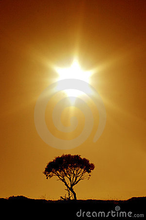 Free Australian Outback: The Last Tree Royalty Free Stock Photo - 144635