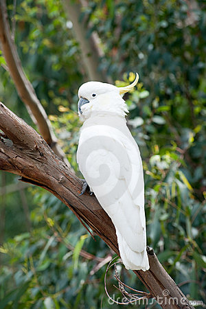 Australian wild parrot in the nature