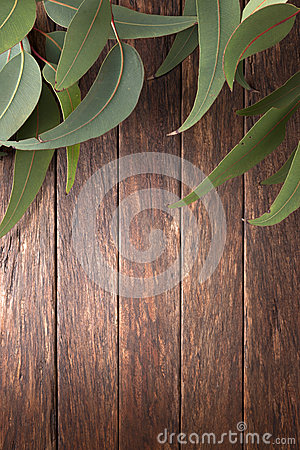 Australian Wood Background Leaves