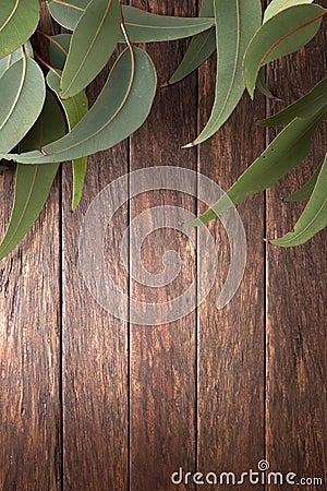 Australijscy Drewniani tło liście
